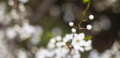 wiosna (1)